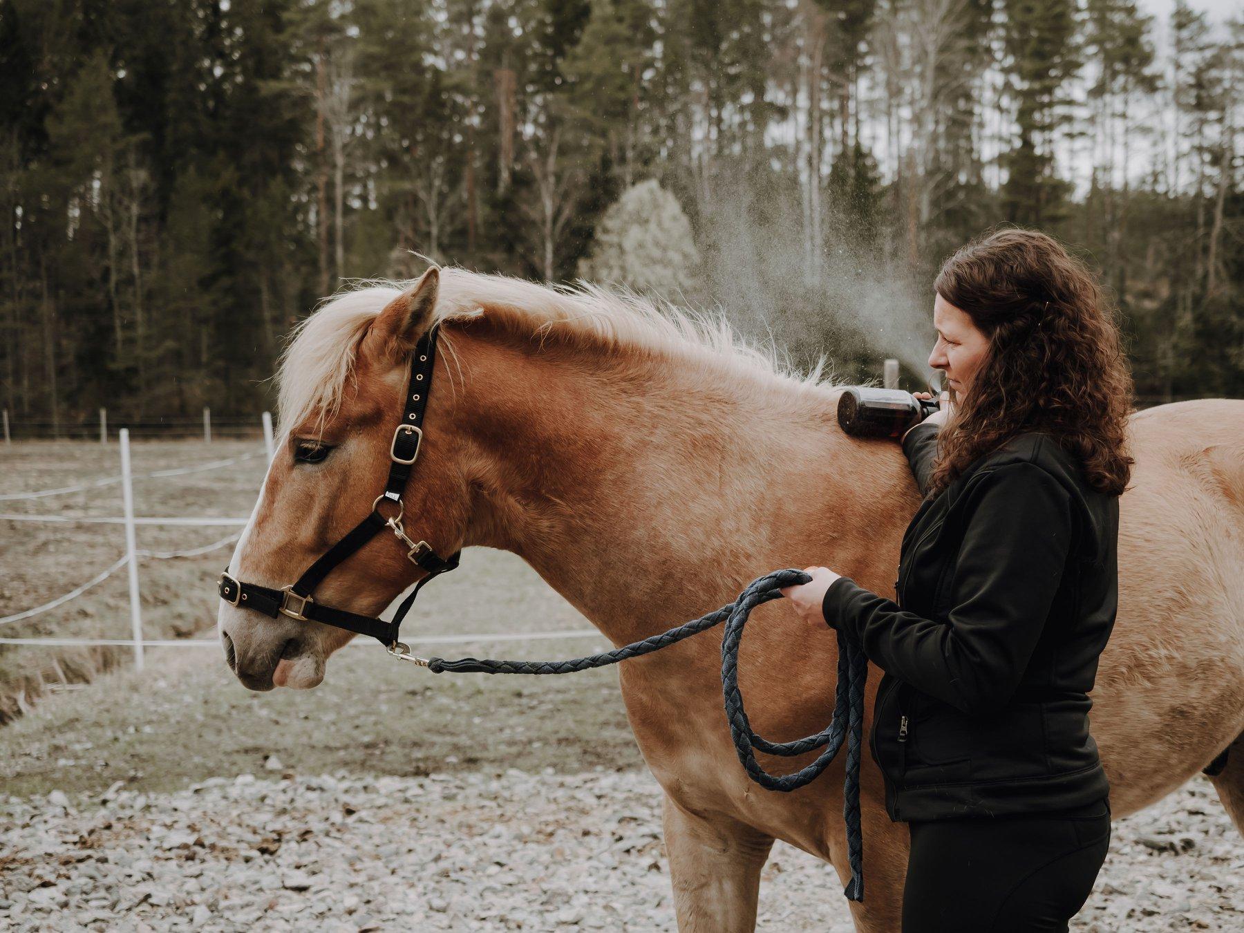 Näin totutat hevosen suihkepulloon