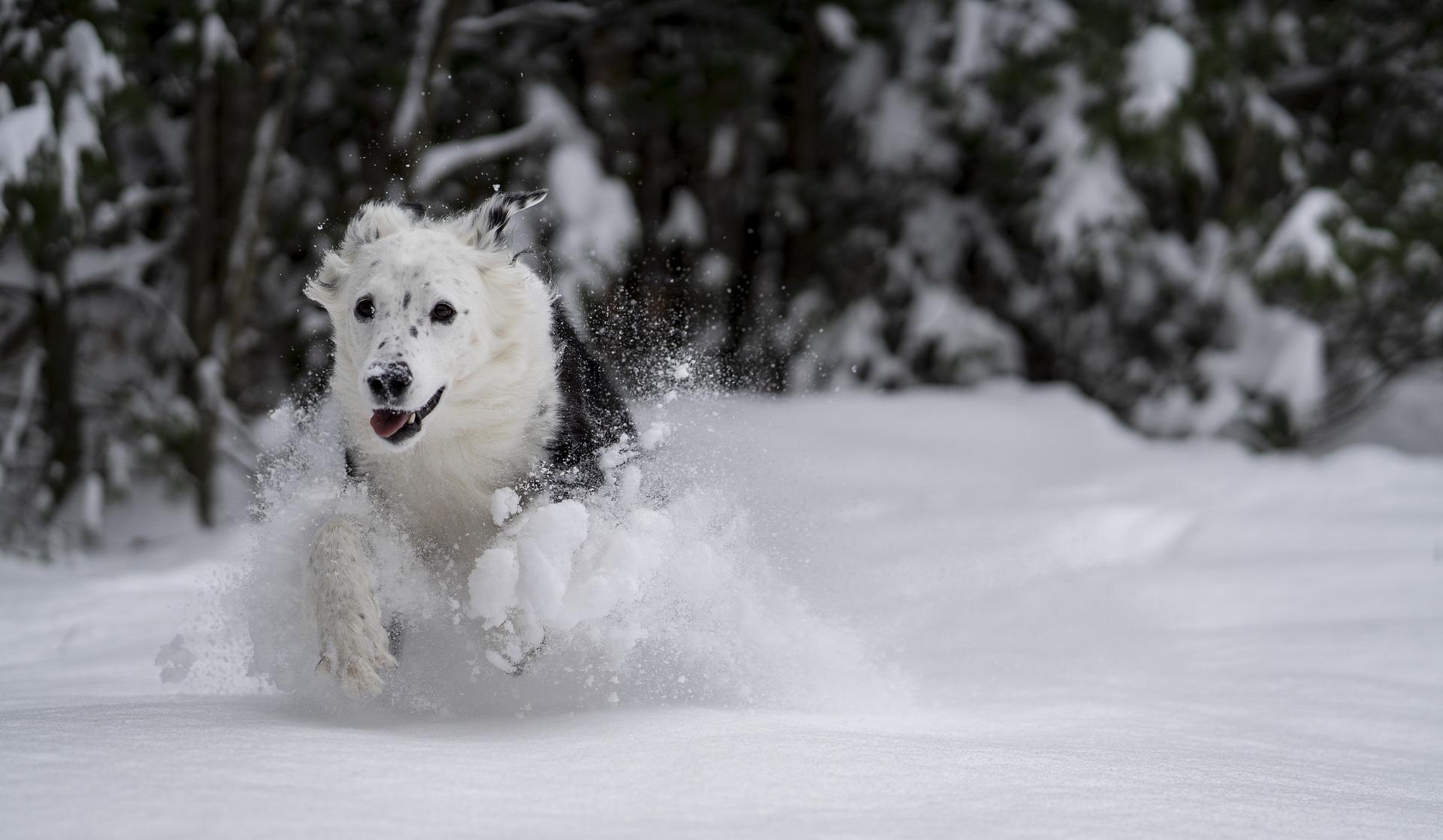 koiran tassut talvikuntoon